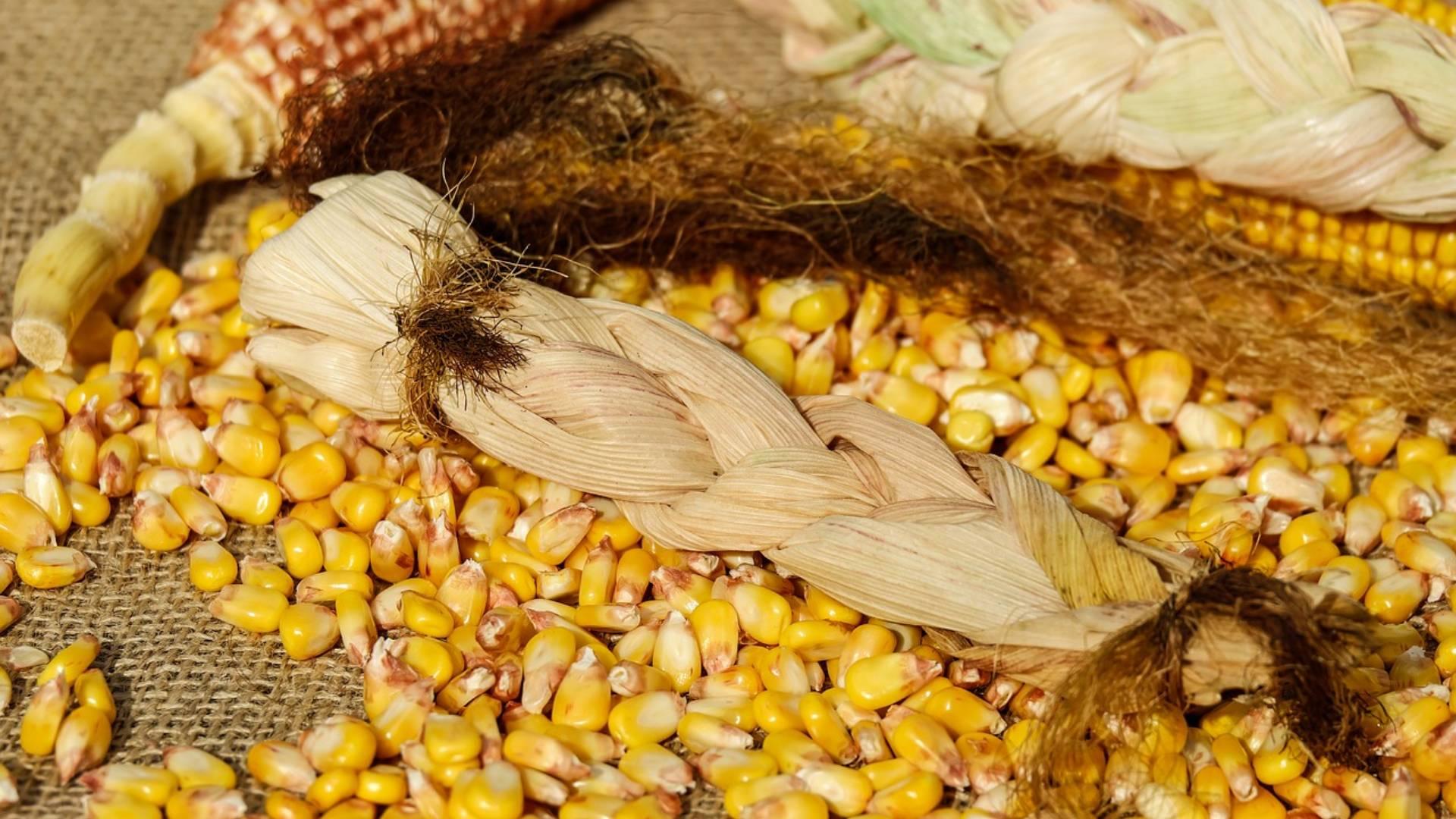 Jak inwestować w kukurydzę